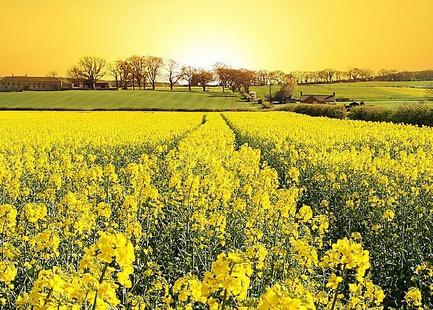 乡村是一片广阔的天地