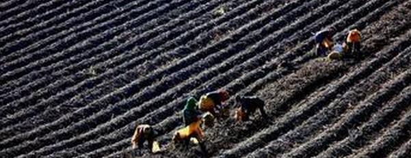 申论热点:黑土资源保护