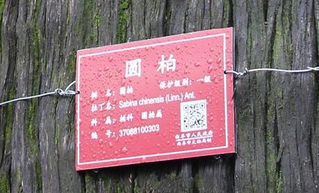 """""""古树名木身份证""""有助于精细化保护"""