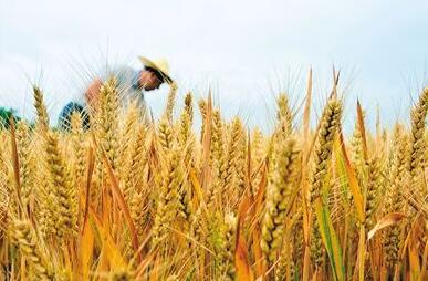 更多农民转向高端供给