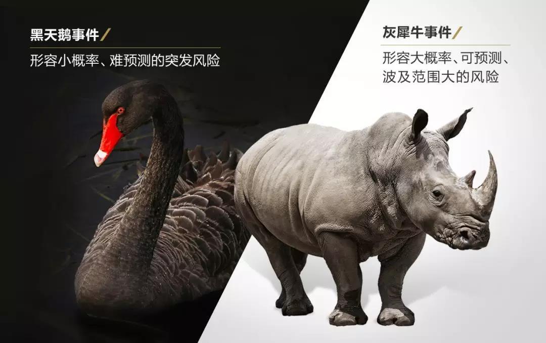 """2021年江苏公务员考试常识积累:""""黑天鹅""""和""""灰犀牛""""事件"""