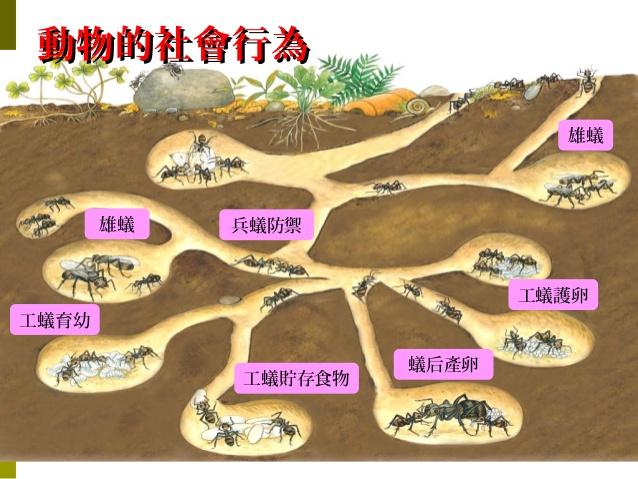 2021年江苏公务员考试常识积累:动物的社会行为